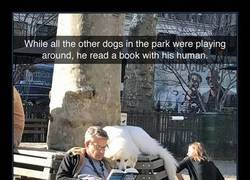 Enlace a Perros que leen más que tú
