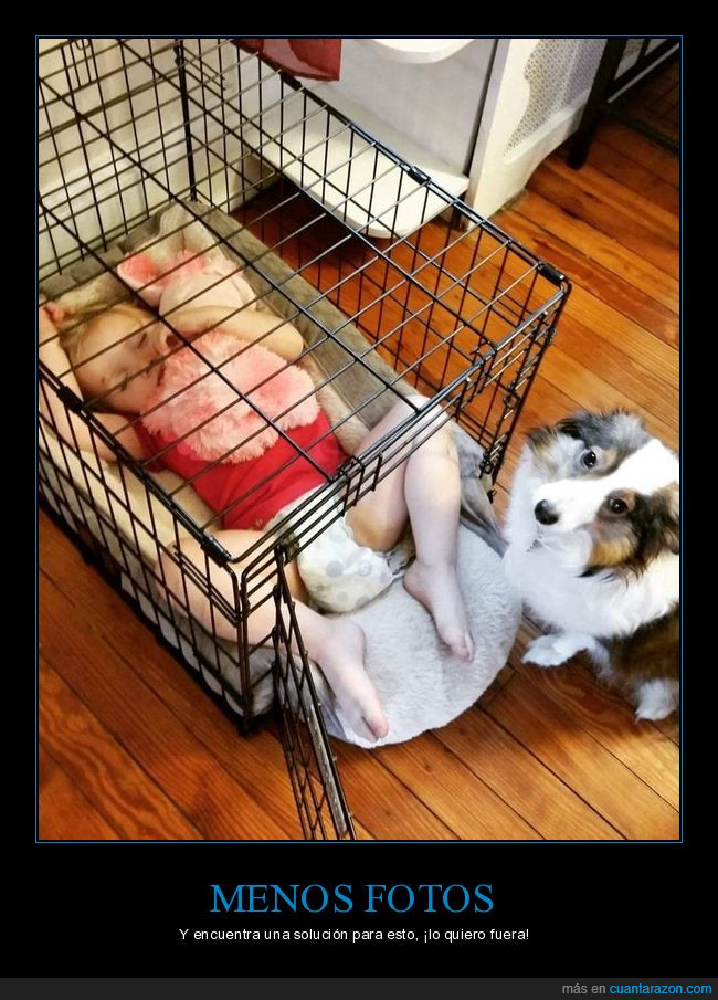 bebé,dormir,jaula,perro