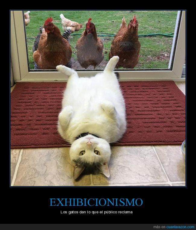 gallinas,gato,mirones
