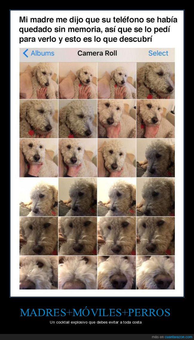 fotos,madre,perro,teléfono