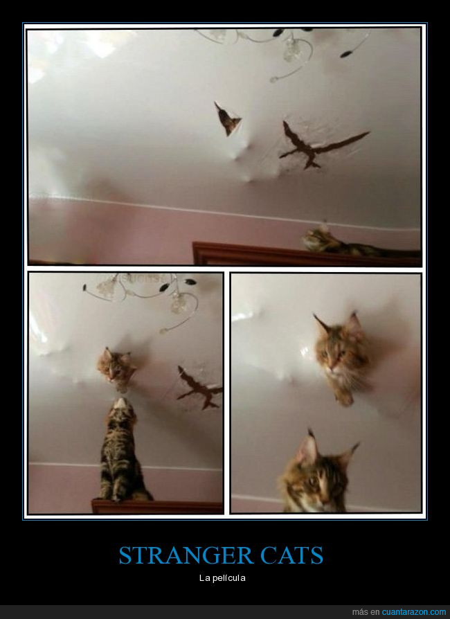 gato,Stranger Cats,stranger things,techo