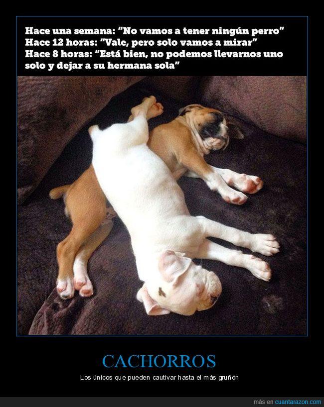 adoptar,cachorros,perros,reticente