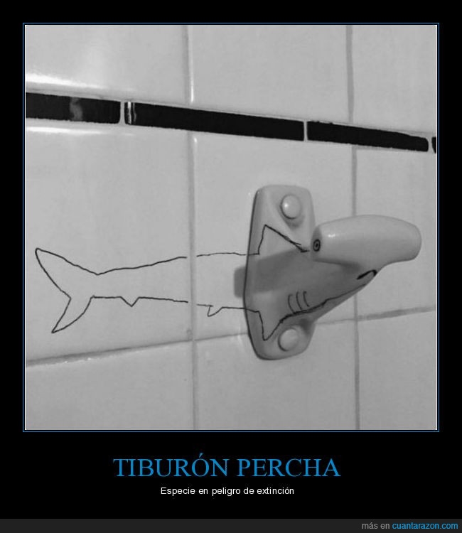 percha,tiburón