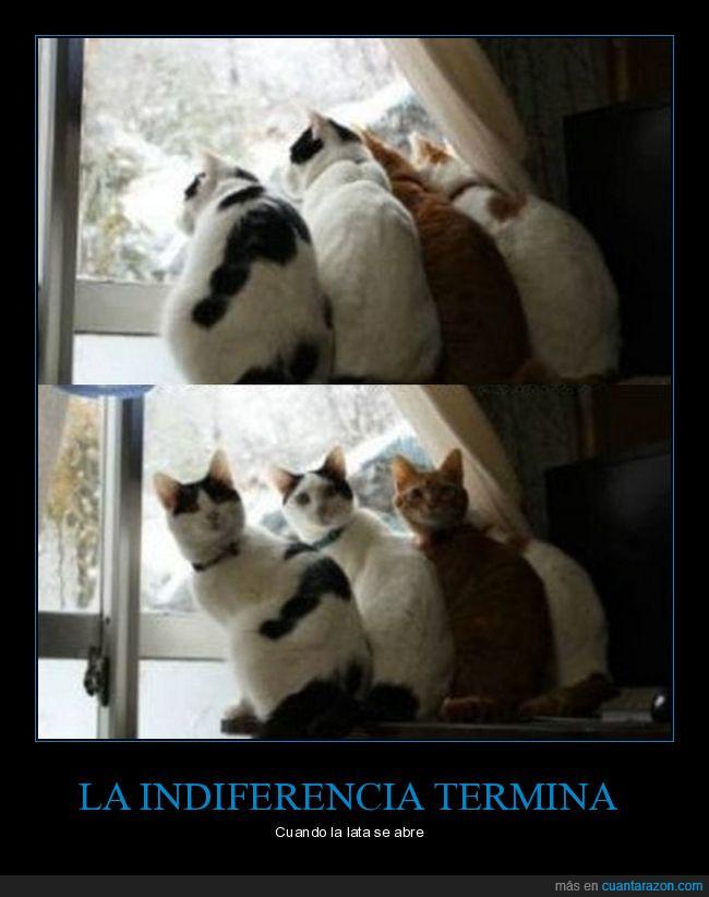 comida,gatos,girarse,indiferencia