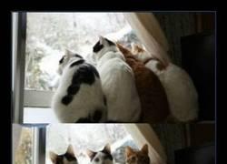 Enlace a Los gatos solo se mueven por una cosa: comida