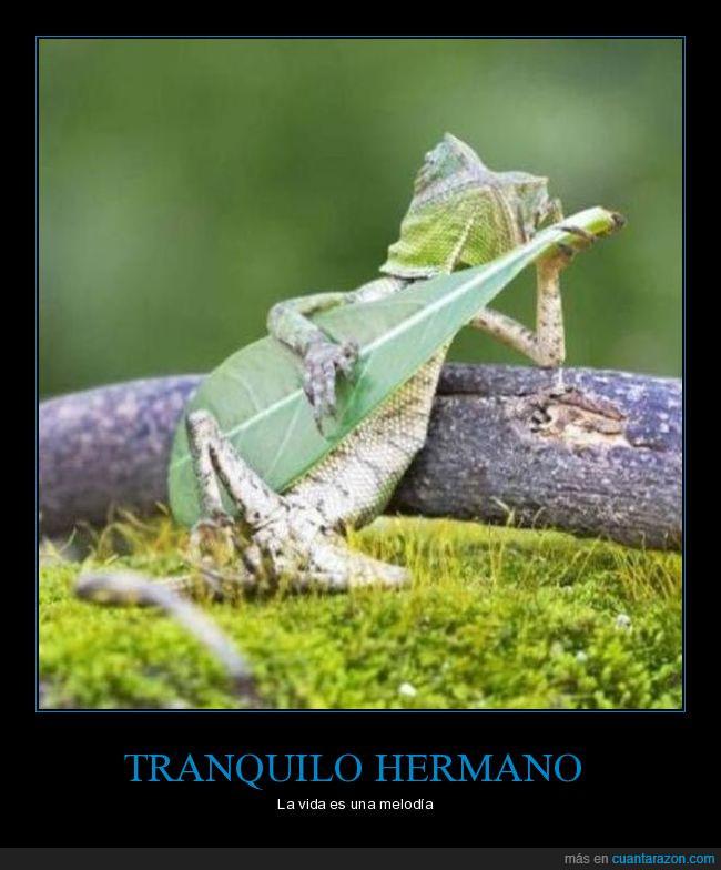 camaleón,guitarra,hoja,humor