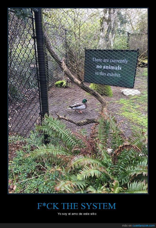 animales,exhibición,pato,sitio
