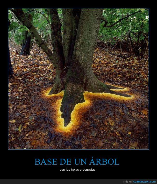 absurder,árbol,hojas,mierder,ordenadas