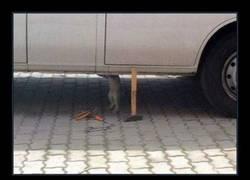 Enlace a Con lo que mola un gato mecánico