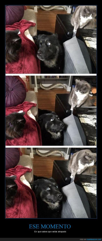 can,felino,gato,gatos,mirada,perro