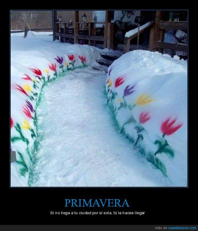 flores,frío,hielo,nieve