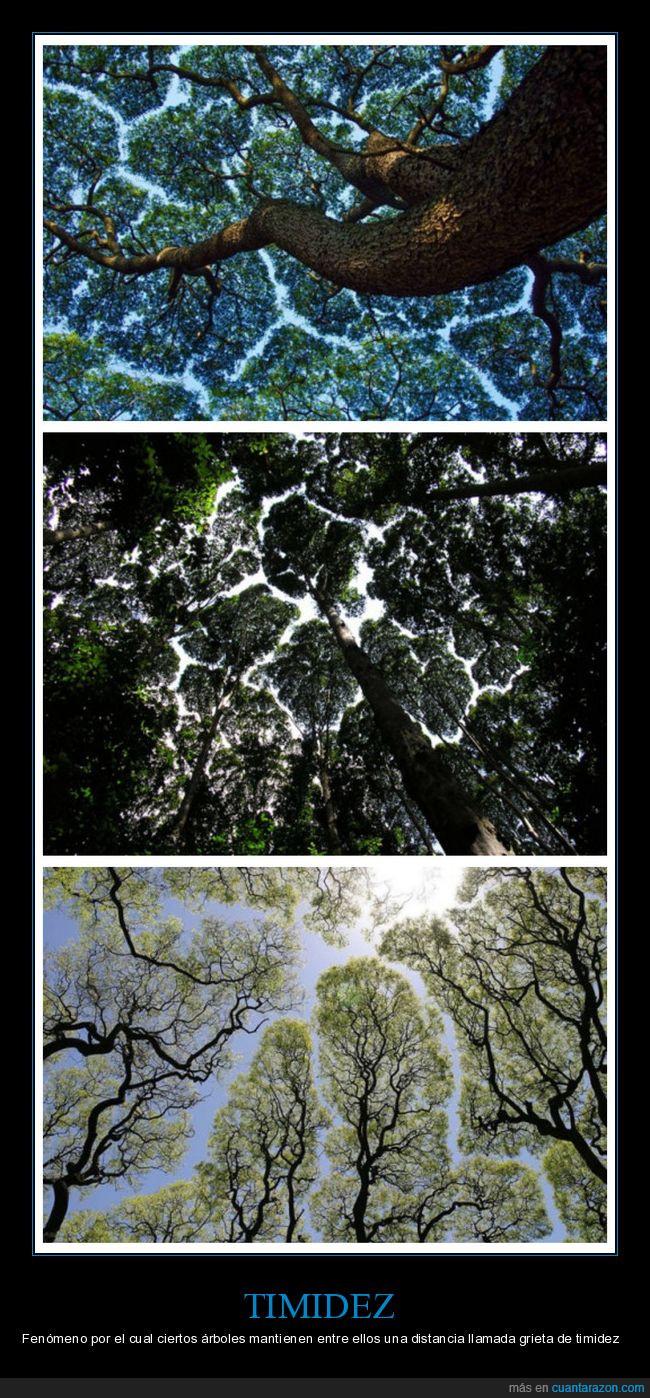 árboles,botánica,timidez