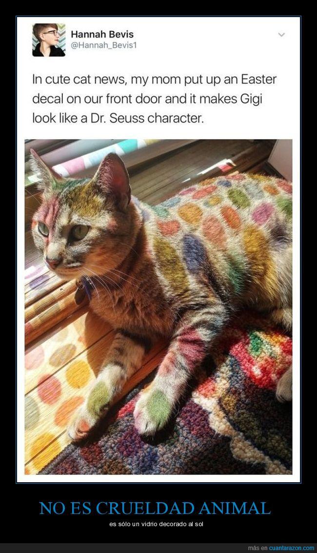 elegancia,félido,felino,fotografía,gato