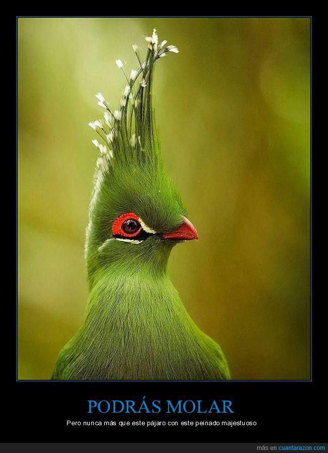 pájaro,peinado