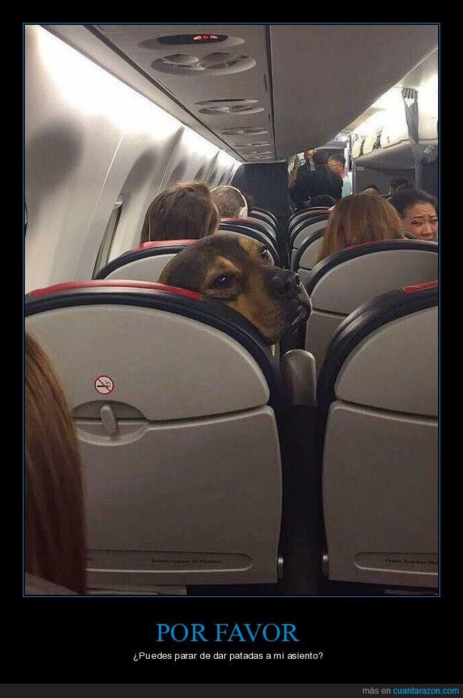 avión,girarse,molesto,perro