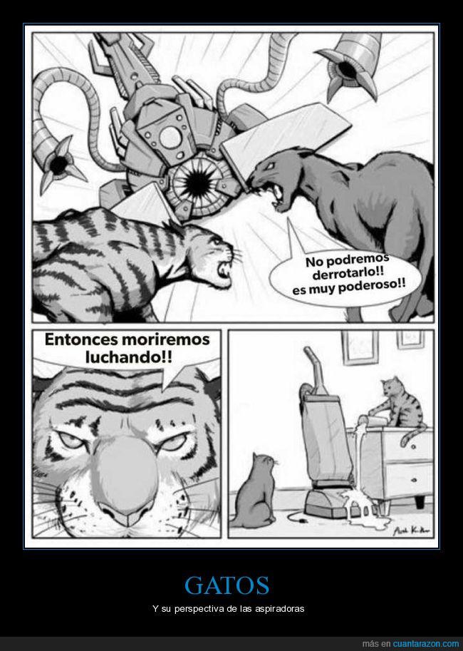 aspiradora,gatos,tigres