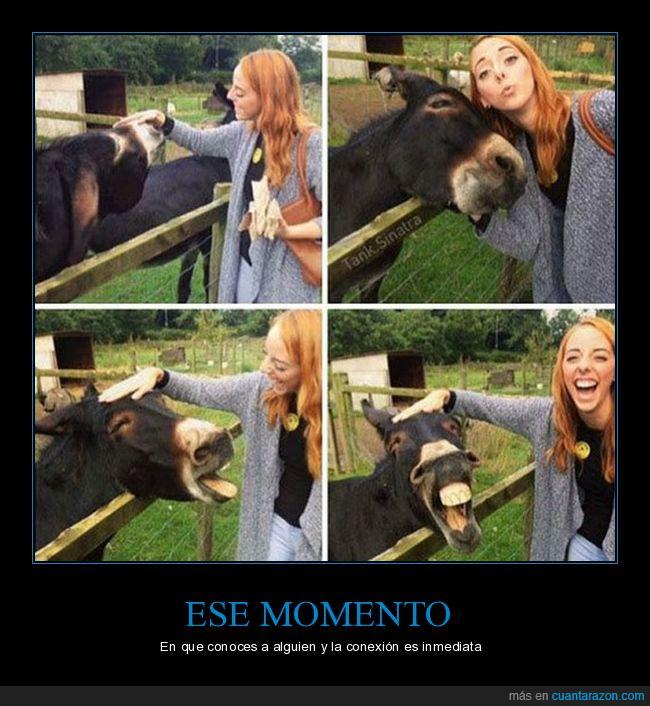 amigos,bffs,caballo,chica,risas