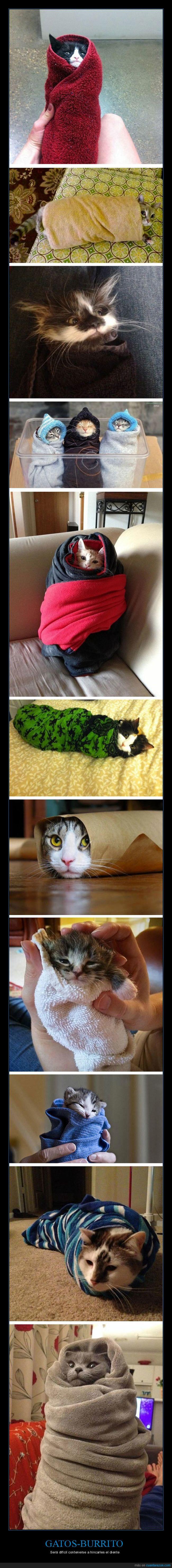burrito,gato,manta,recogiditos