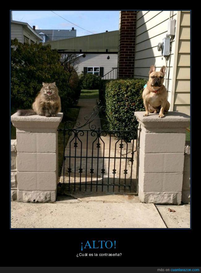 can,elegancia,entrada,félido,felino,fotografía,gato,perro,puerta