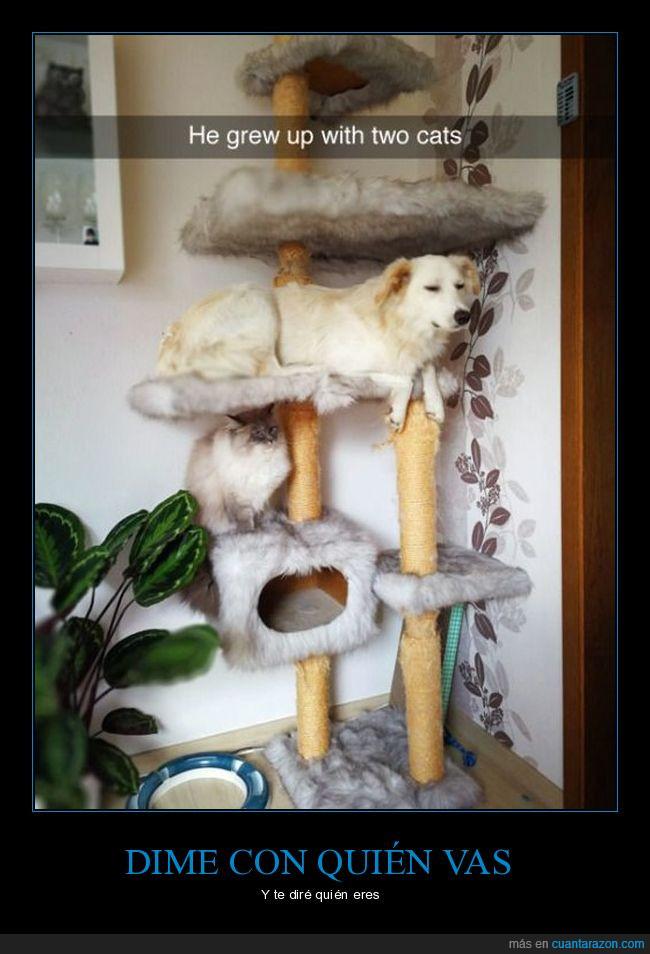 comportamiento,gatos,perro