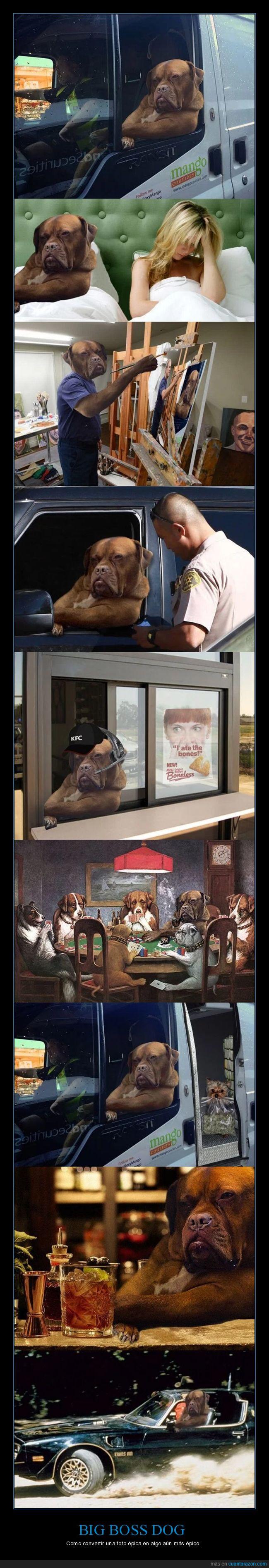 coche,internet,perro,photoshop
