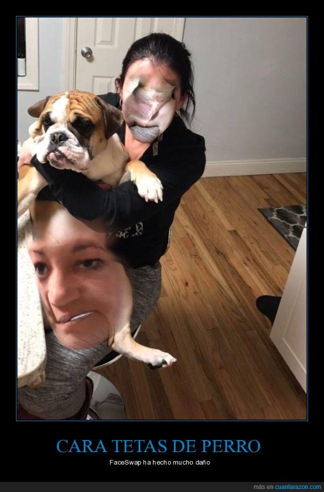 cara,daño,faceswap,foto,perro,snapchat
