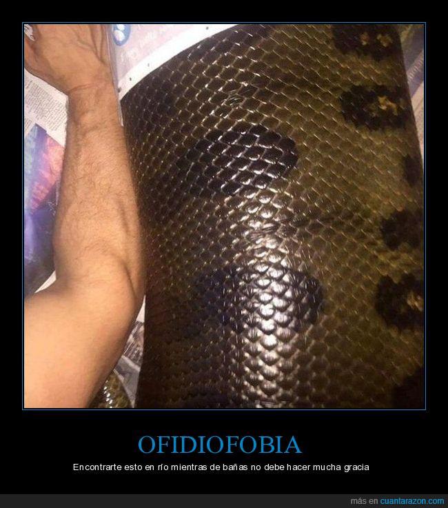 Amazonas,anaconda,miedo a las serpientes,ofidiofobia,serpiente