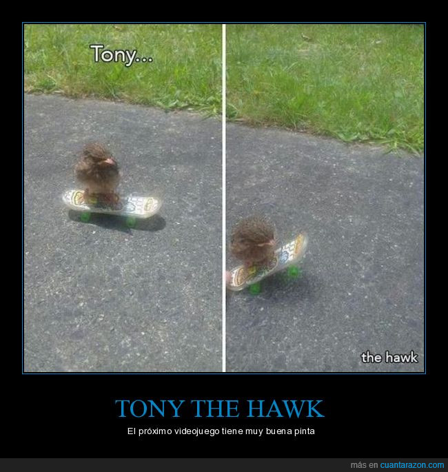 calle,hierba,pájaro,pinta,skate,tony the hawk,videojuego