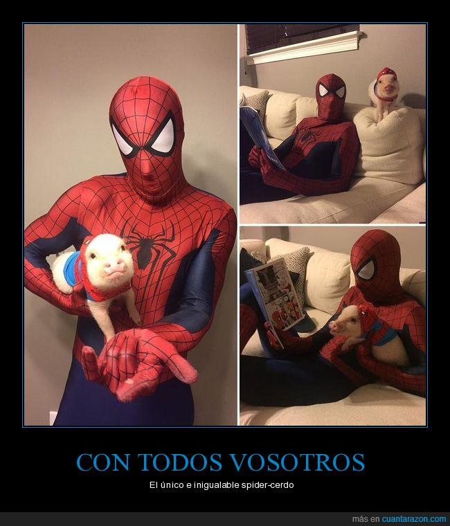 araña,cerdo,disfraz,spiderman
