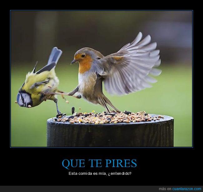 alas,comido,épico,Esto es Esparta,pájaros,patada,pico