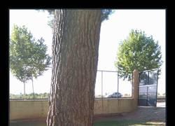 Enlace a El árbol está ya harto