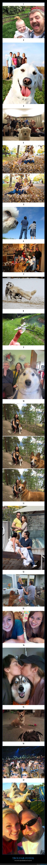 fotos,perros,photobomb,trolear