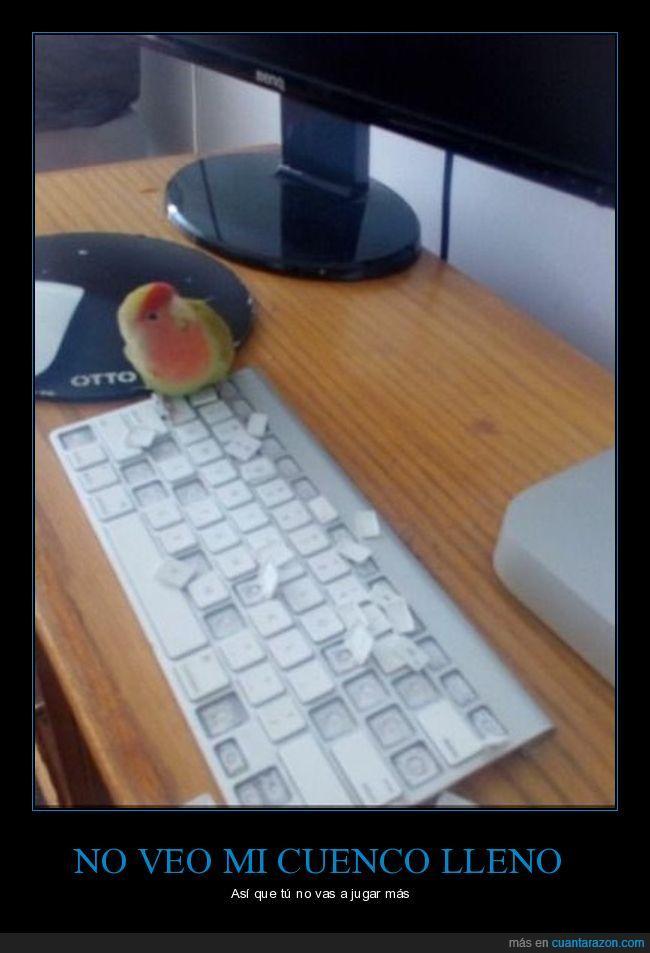 perico,teclado,teclas
