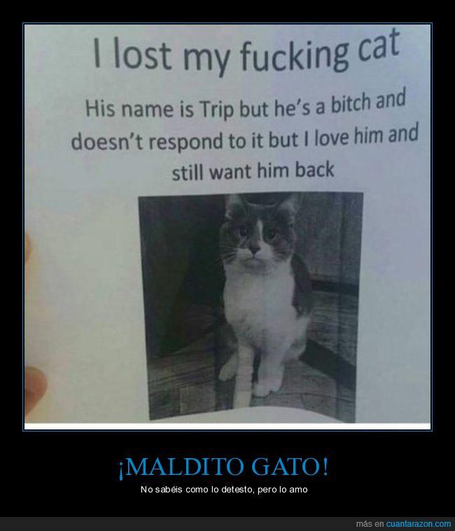 amar,amo,cartel,gato,maldito,perdido