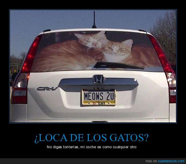 coche,gatos,honda,loca,matrícula,señora,ventana