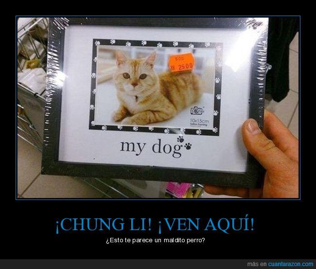 chinos,chung li,error,fail,foto,gato,mano,marco,perro