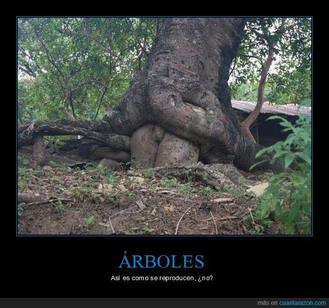 árbol,bosque,malpensados