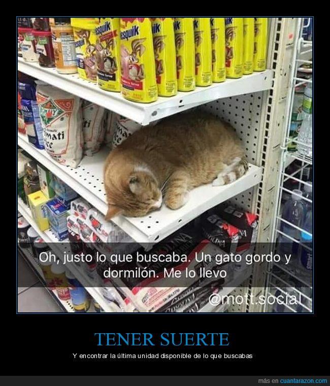 estantería,gato,suerte