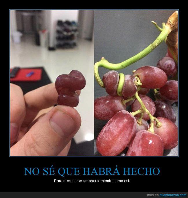 ahorcamiento,ejecutar,rama,uva