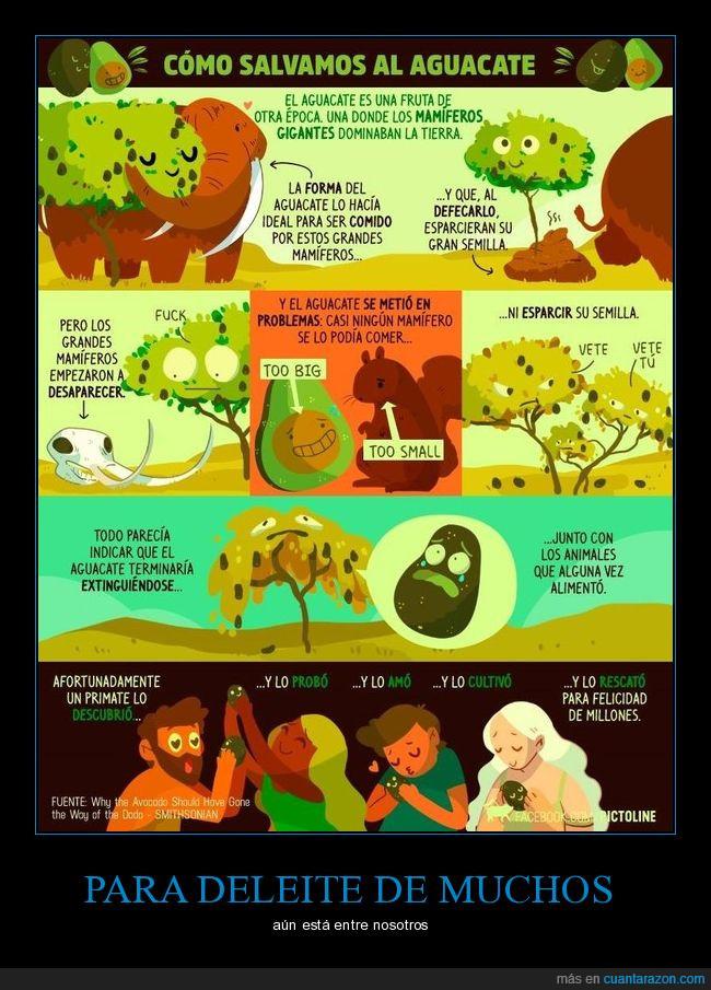 aguacate,extinción,salvar