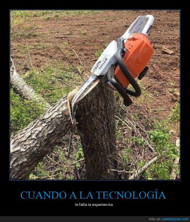 árbol,corte,sierra