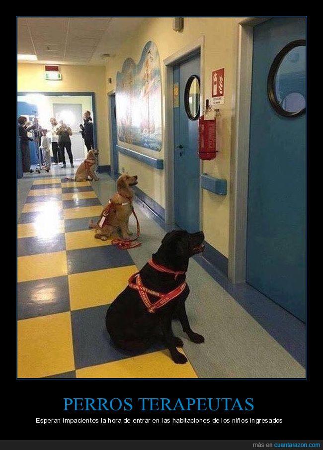 niños,pediatra,perros
