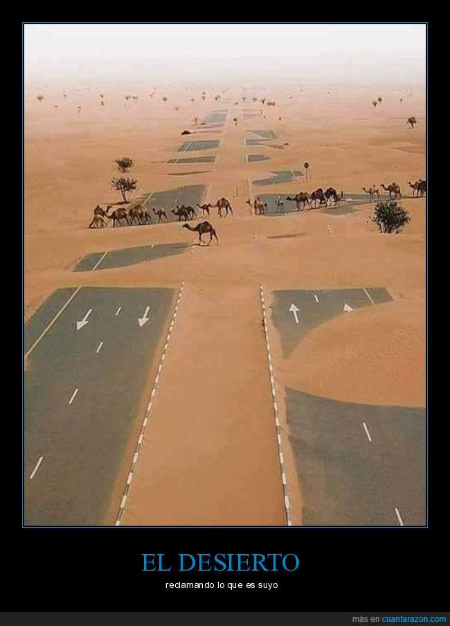 arena,camellos,desierto,pista