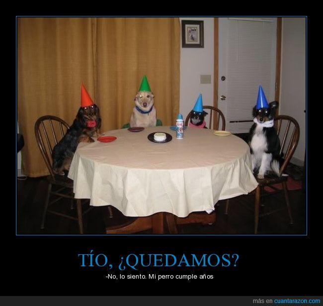 cumpleaños,cumplir,mesa,Perro,tarta