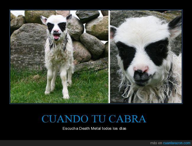 blanco,cabra,Death Metal,música,negro,nórdicos,ojos,pelo,rocas