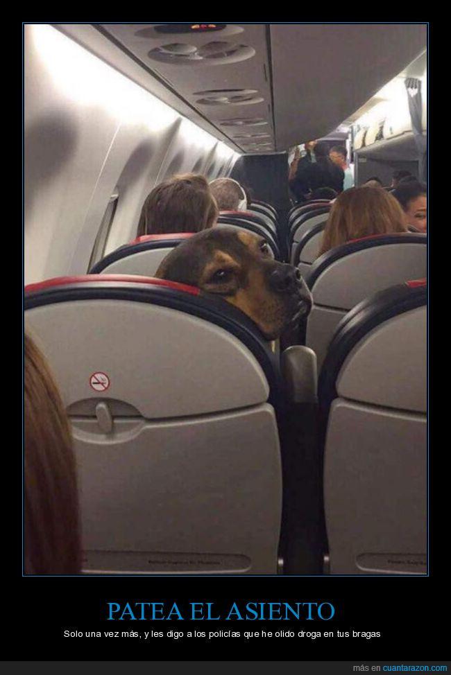 aeropuerto,asiento,avión,bragas,oler,perro,policia