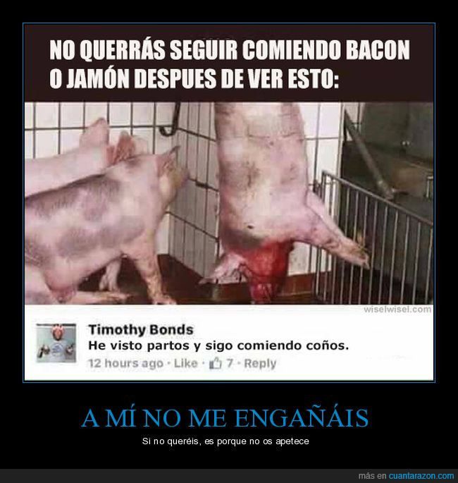 bacon,cerdo,comentario,comer,coño,video
