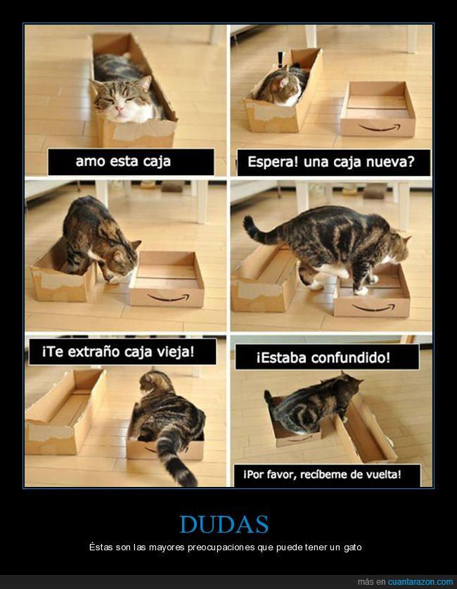 cajas,confusión,gato
