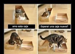 Enlace a Esto es lo que sucede cuando intentas confundir a tu gato