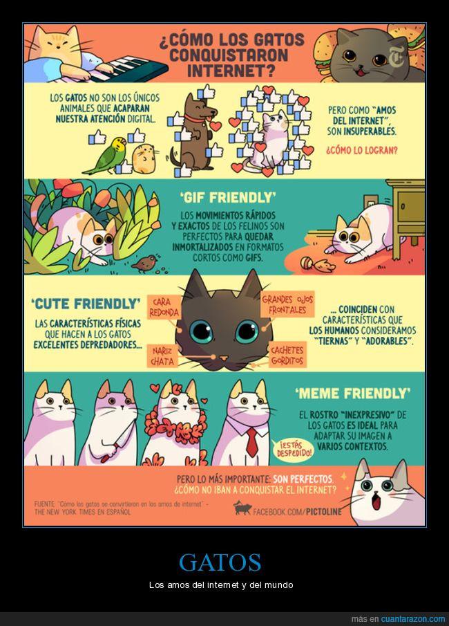 dominar,felinos,gatos,mundo